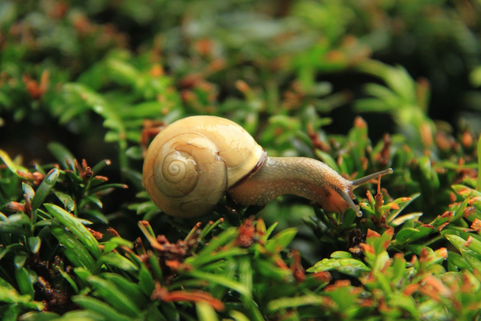 A snail explores some sprouting plants. Source: Cristian Bortes_Flickr_CC BY 2.0